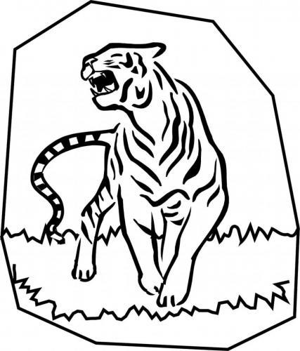 disegno tigre