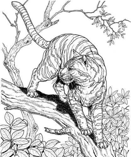 disegno tigre da colorare