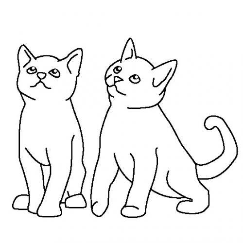 due gatti disegni