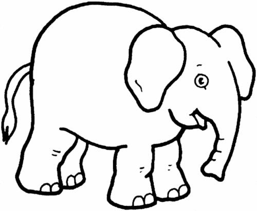 elefante disegni