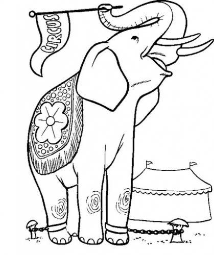 elefante immagini per bambini