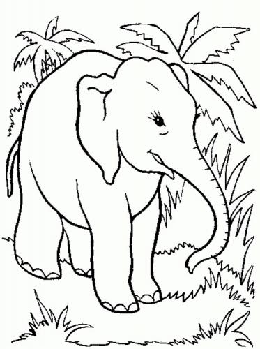 elefante indiano disegno
