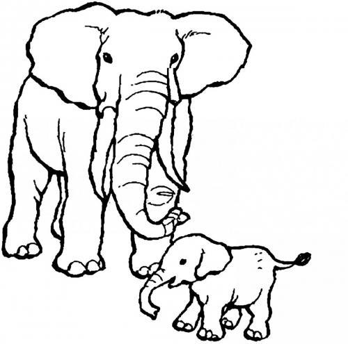 elefanti disegni