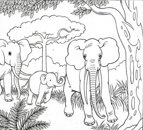 elefanti immagini
