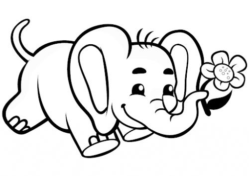 elefantini immagini