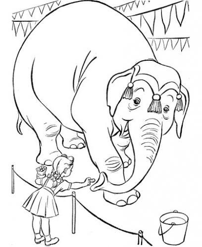 faccia elefante