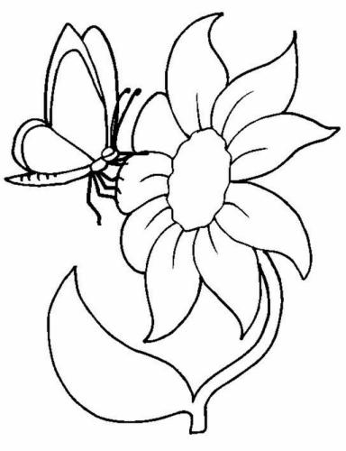 farfalla con girasole