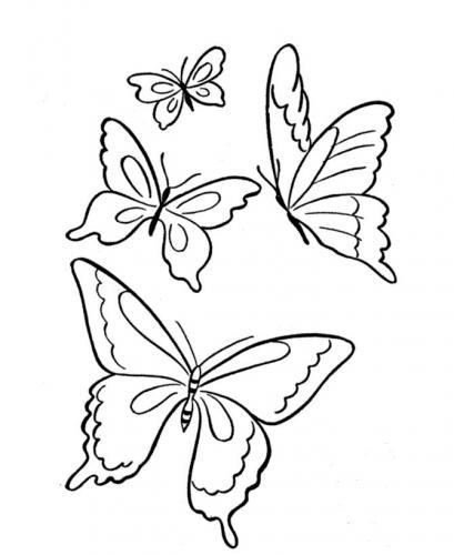 farfalla disegno