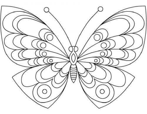 farfalla immagini