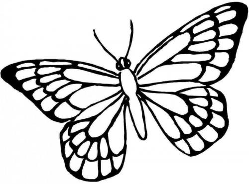 farfalle disegno