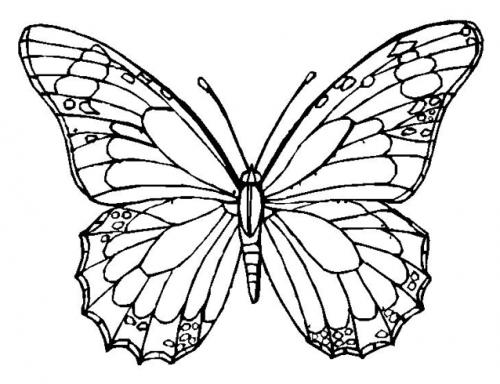 farfalle immagini