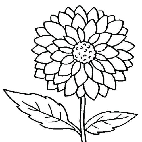 fiori da disegnare facili