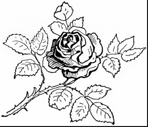 fiori da stampare e colorare