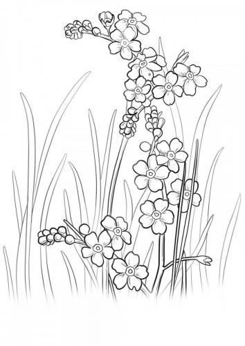 fiori disegni da colorare