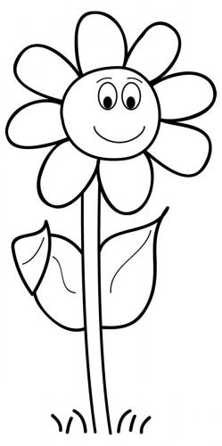 fiori disegni