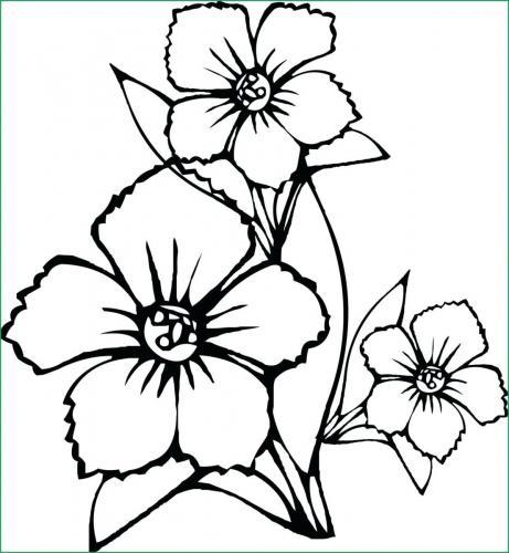 fiori immagini da scaricare
