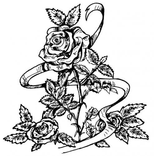 rosa elegante