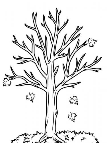 foglie alberi disegni