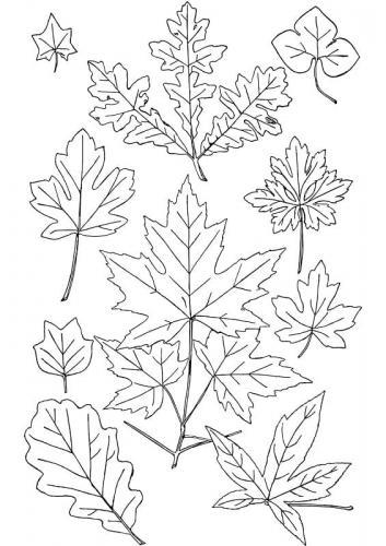 foglie autunnali da colorare per bambini