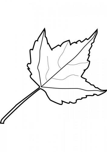 foglie autunnali da stampare e colorare