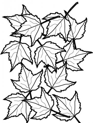 foglie Autunno disegni