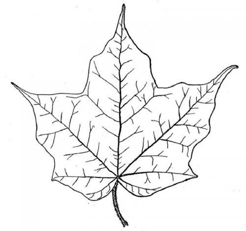 foglie d'Autunno disegni