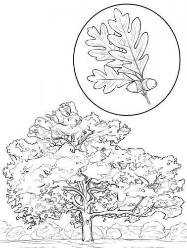 foglie da colorare e stampare