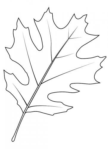 foglie da colorare per bambini