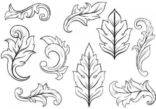 foglie di Acanto disegni