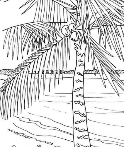 foglie di palma disegno