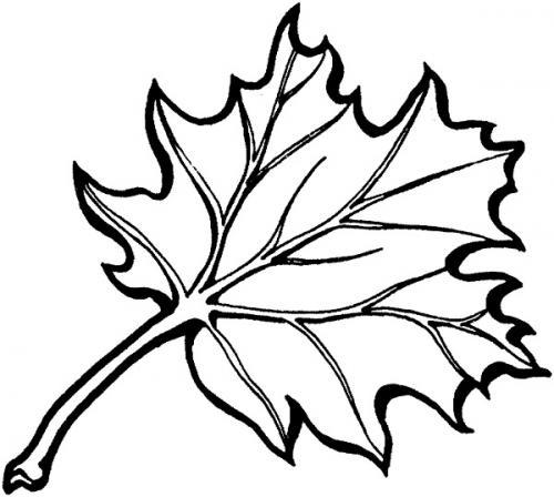 foglie di Quercia da colorare