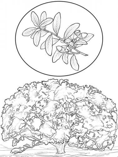 foglie disegni per bambini