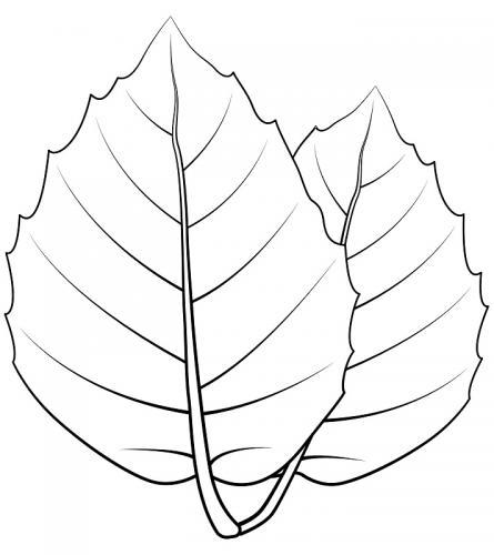 foglie disegno