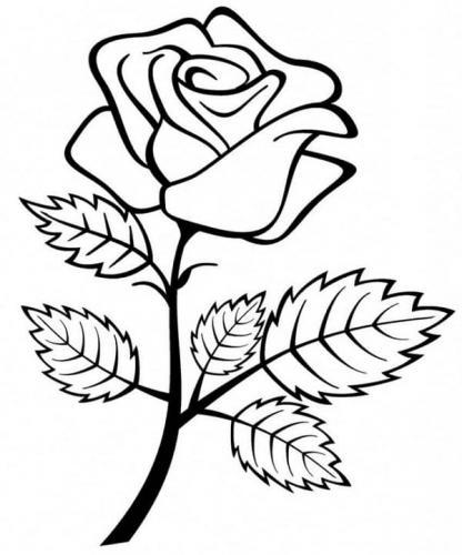 foglie rosa disegno