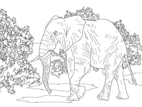 foto di elefanti gratis