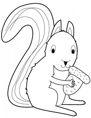 foto di scoiattoli