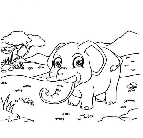 foto di un elefante