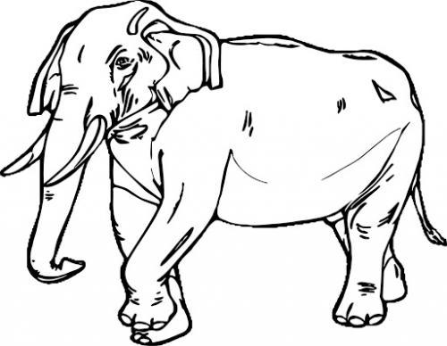 foto elefante disegni