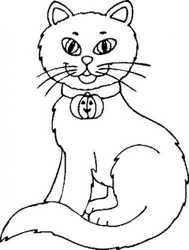gatta con un simpatico campanellino