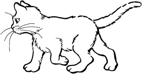 gatti disegno