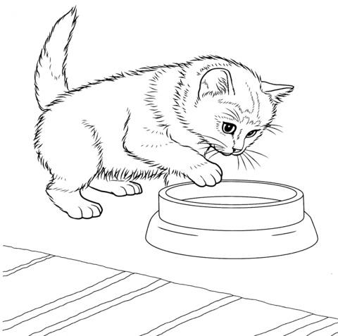 gattino disegno