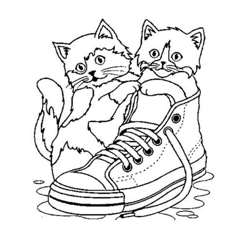 gatto nella scarpa