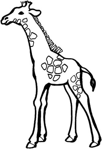 giraffe da colorare per bambini