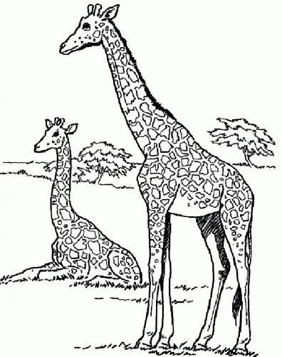 giraffe da stampare e colorare