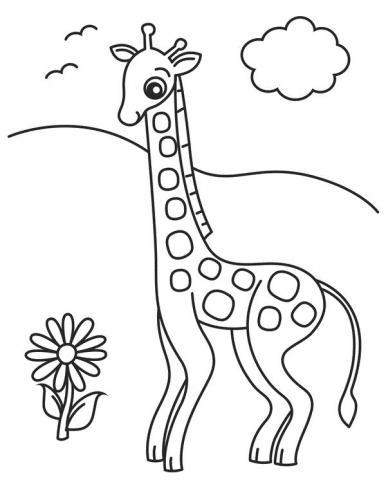 giraffe immagini da scaricare