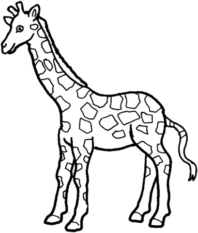 giraffe immagini divertenti