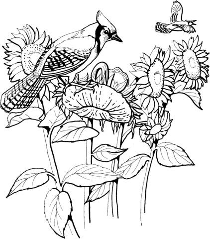girasoli e uccelli
