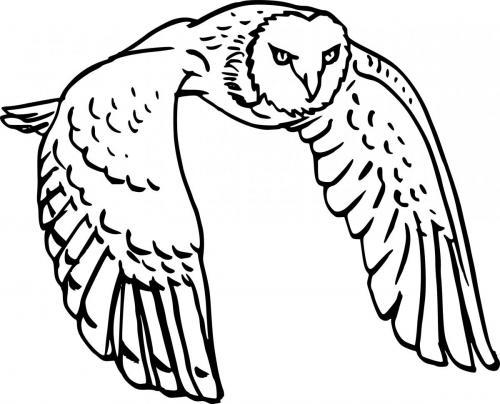 barbagianni