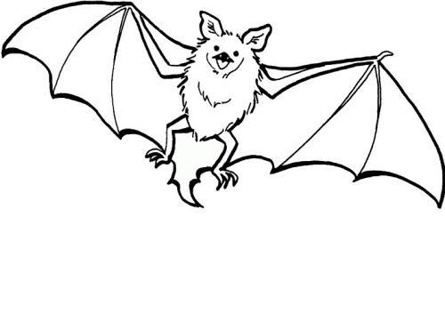 disegno del pipistrello