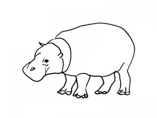 illustrazioni animali